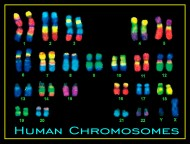 Chromosome 14 – The Answer to Cancer?