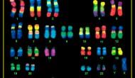 Chromosome 14 – The Answer toCancer?